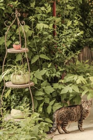Etajera Romantic Garden Brown